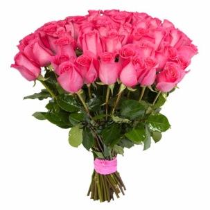 Розы Эквадор Pink Floyd